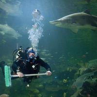 Подводный клининг: с риском для жизни