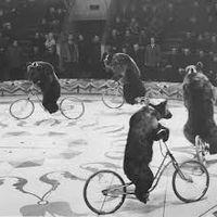 Стандарты на рынке фасилити или Зачем каждому «медведику» по «велосипедику»?